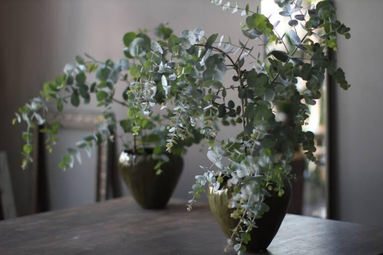 Eukalüpt, oliivipuu ja loorberipuu Artishok salongis